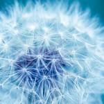 花粉症治療薬アレニルを 15%オフで!