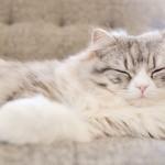 快適な睡眠を得るために9のTips